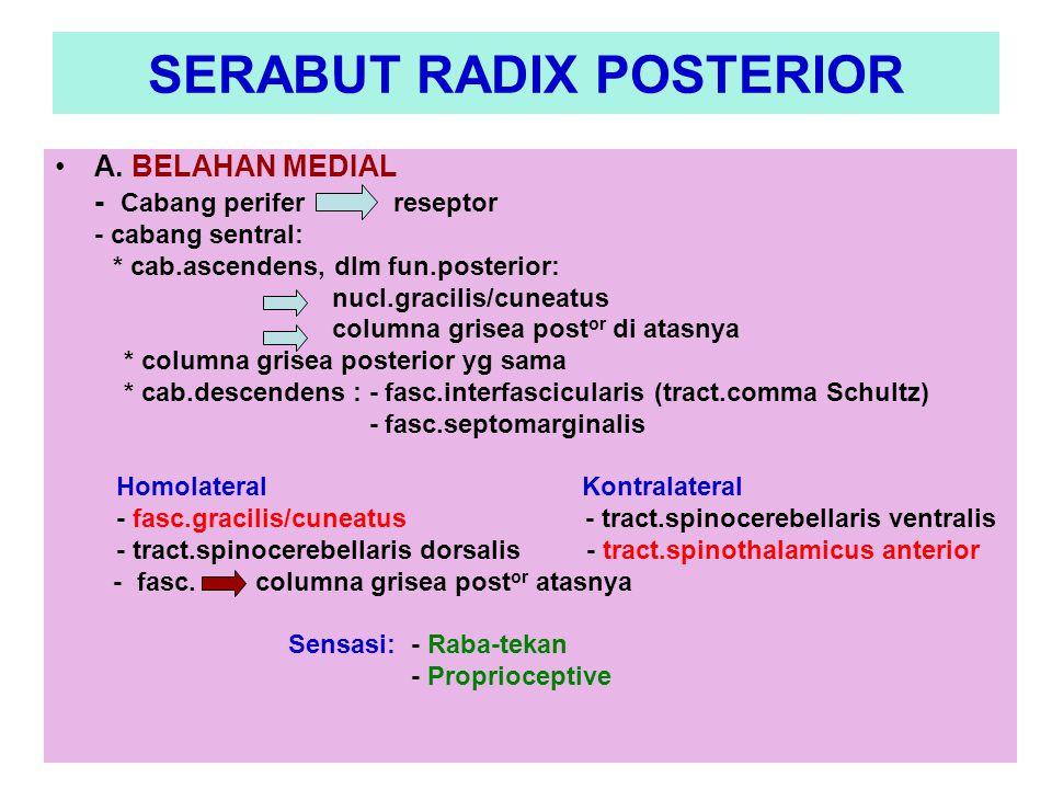 SERABUT RADIX POSTERIOR
