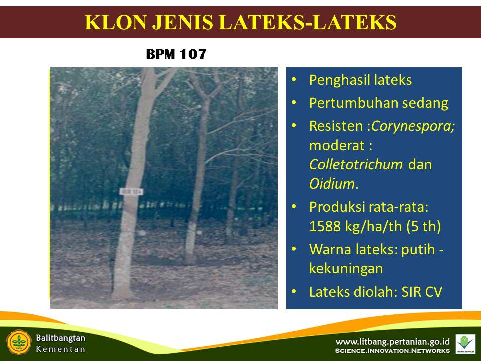 KLON JENIS LATEKS-LATEKS