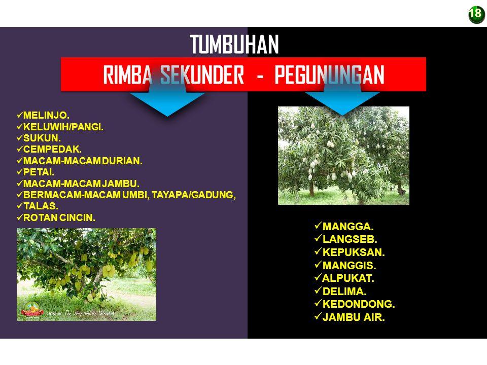 RIMBA SEKUNDER - PEGUNUNGAN