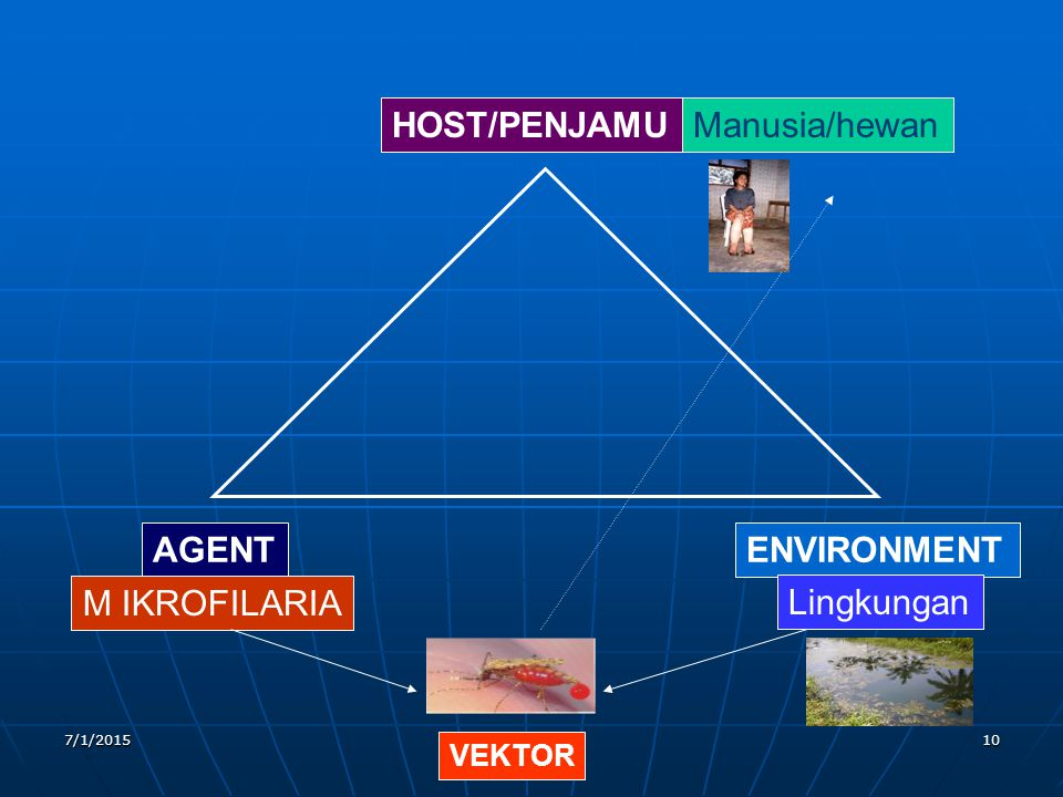 HOST/PENJAMU Manusia/hewan AGENT ENVIRONMENT M IKROFILARIA Lingkungan