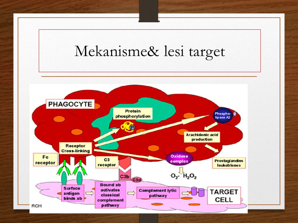 Mekanisme& lesi target