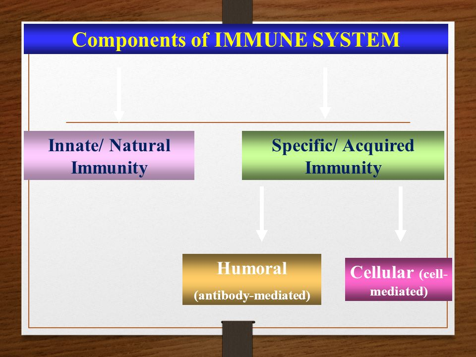 Components of IMMUNE SYSTEM