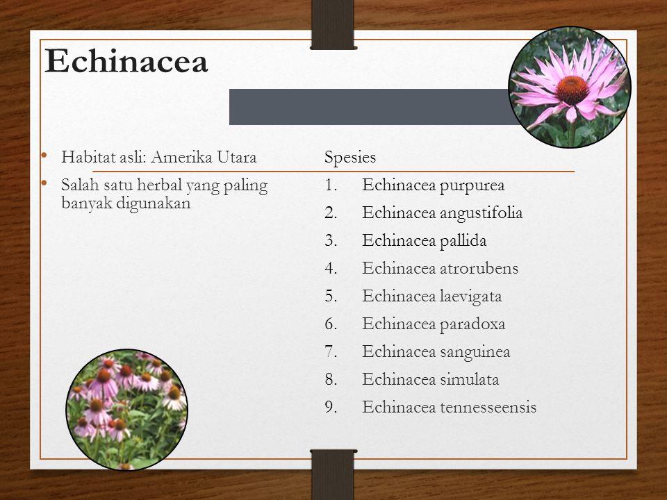 Echinacea Habitat asli: Amerika Utara