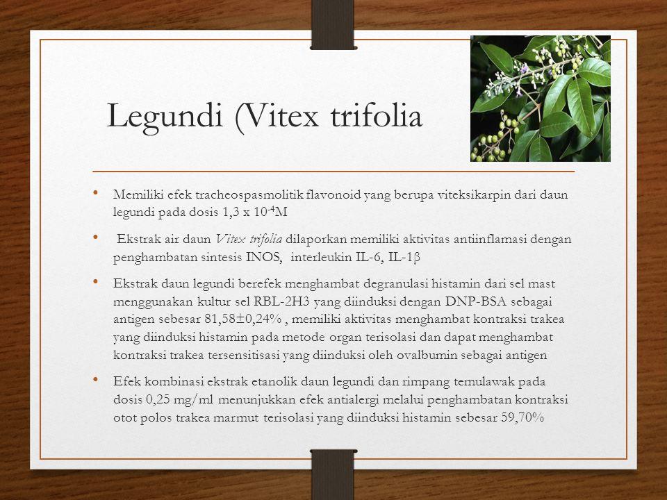 Legundi (Vitex trifolia