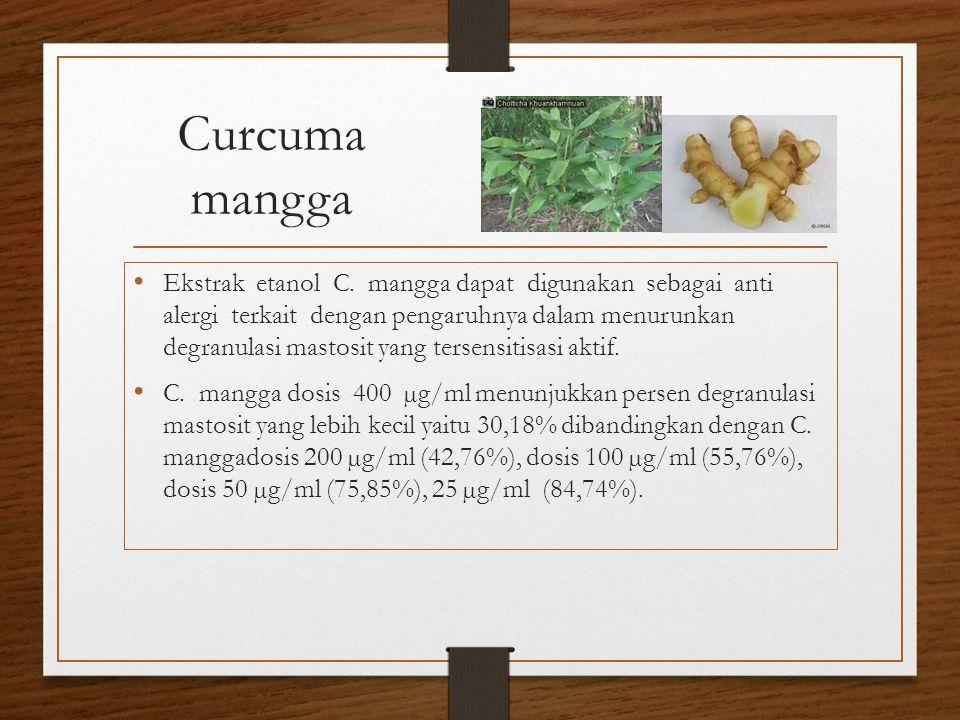 Curcuma mangga