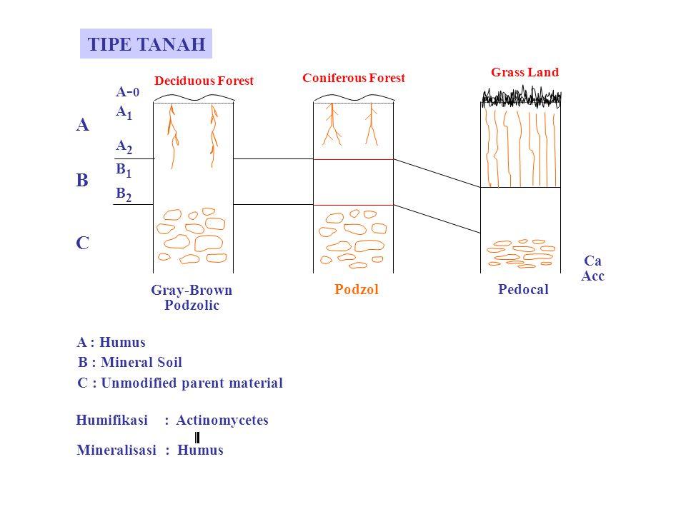 C : Unmodified parent material Humifikasi : Actinomycetes