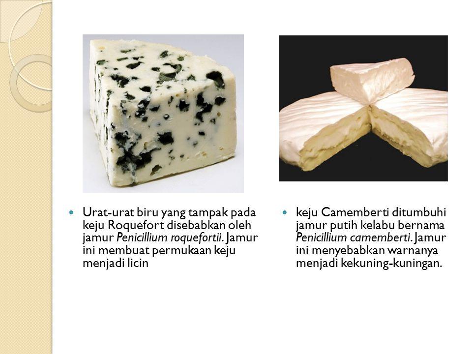 Urat-urat biru yang tampak pada keju Roquefort disebabkan oleh jamur Penicillium roquefortii. Jamur ini membuat permukaan keju menjadi licin