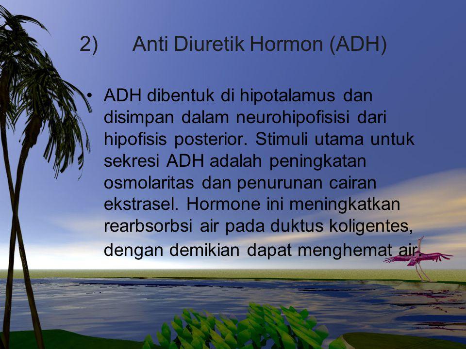 2) Anti Diuretik Hormon (ADH)