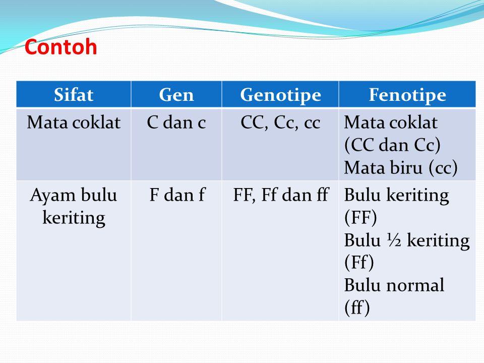 Contoh Sifat Gen Genotipe Fenotipe Mata coklat C dan c CC, Cc, cc