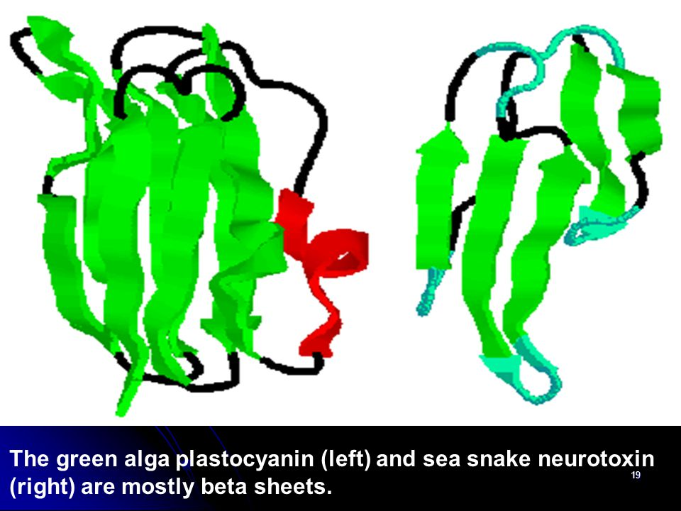 The green alga plastocyanin (left) and sea snake neurotoxin (right) are mostly beta sheets.