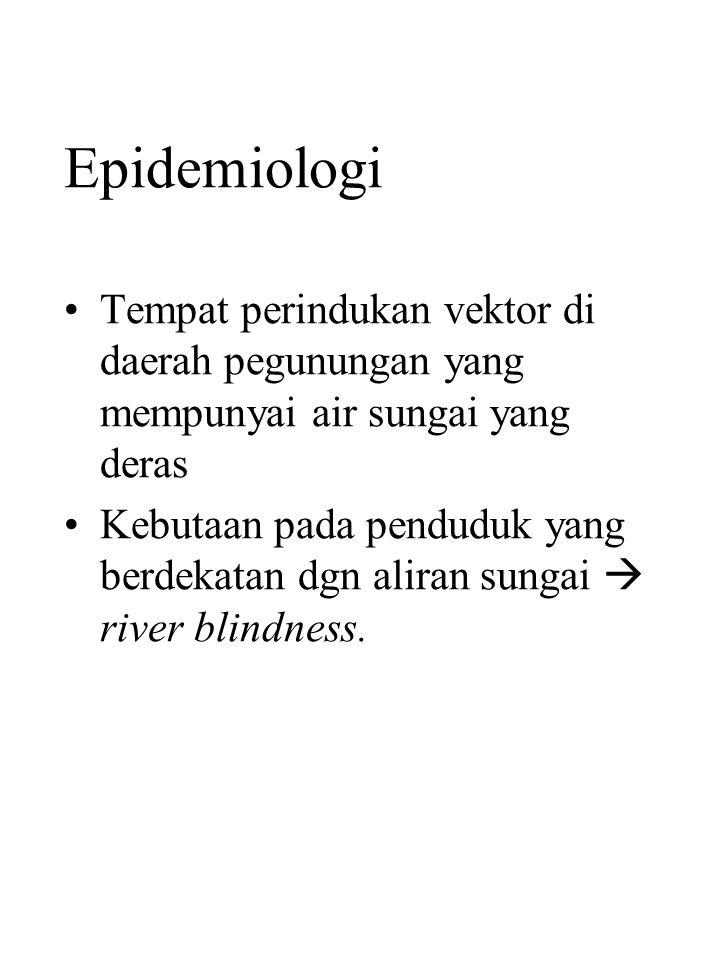 Epidemiologi Tempat perindukan vektor di daerah pegunungan yang mempunyai air sungai yang deras.