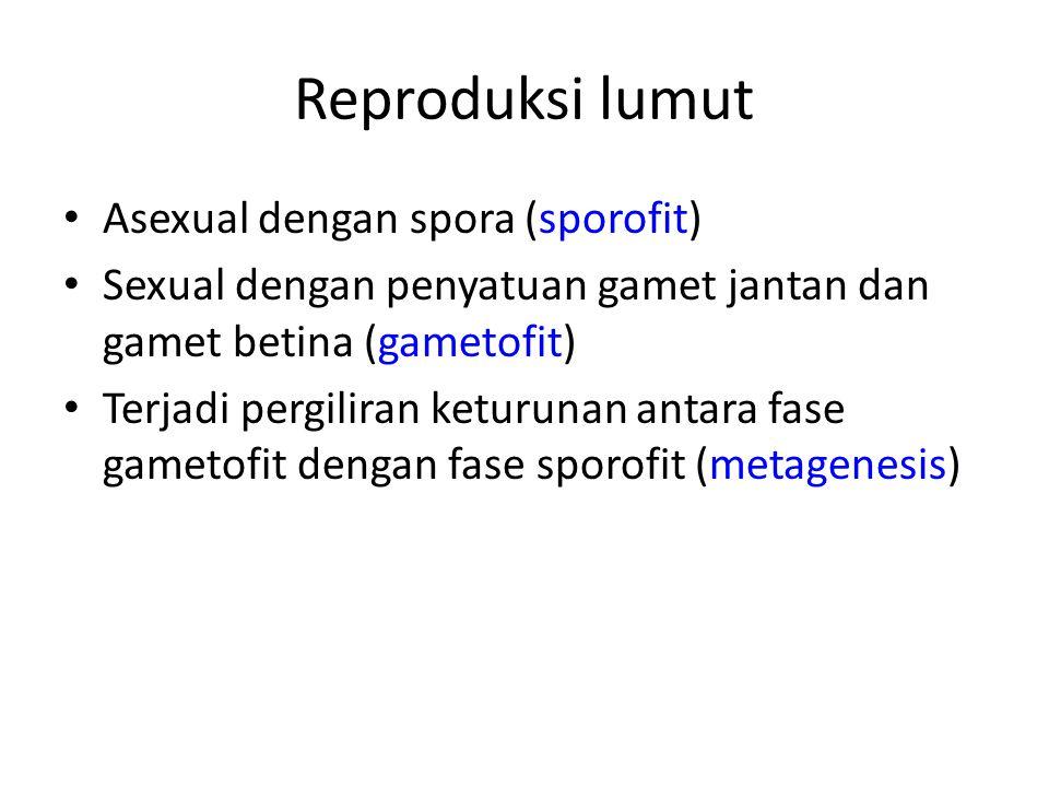 Reproduksi lumut Asexual dengan spora (sporofit)