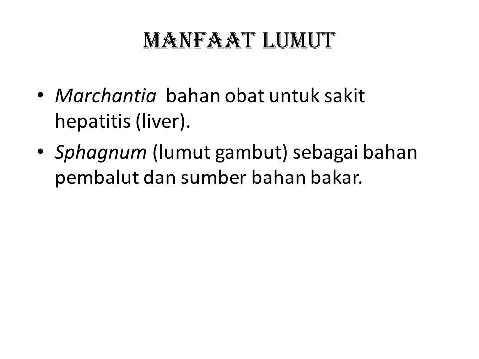 MANFAAT LUMUT Marchantia bahan obat untuk sakit hepatitis (liver).