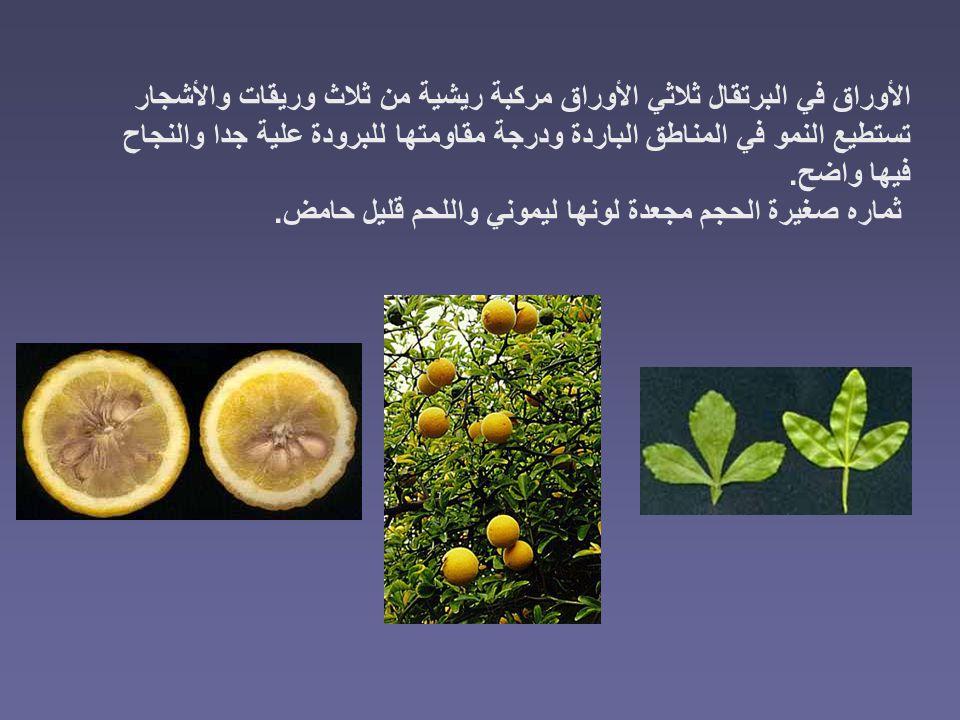 الأوراق في البرتقال ثلاثي الأوراق مركبة ريشية من ثلاث وريقات والأشجار تستطيع النمو في المناطق الباردة ودرجة مقاومتها للبرودة علية جدا والنجاح فيها واضح.