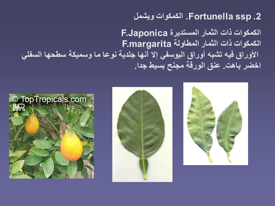 2. Fortunella ssp. الكمكوات ويشمل