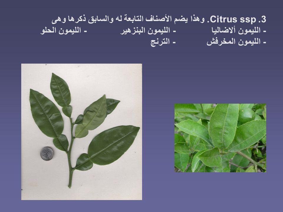 3. Citrus ssp. وهذا يضم الأصناف التابعة له والسابق ذكرها وهى