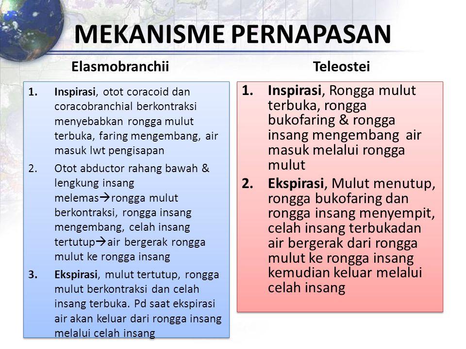 MEKANISME PERNAPASAN Elasmobranchii Teleostei