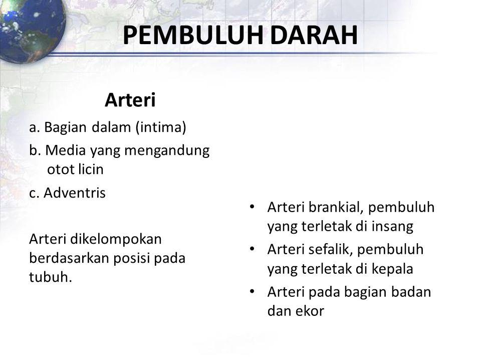 PEMBULUH DARAH Arteri. a. Bagian dalam (intima) b. Media yang mengandung otot licin c. Adventris Arteri dikelompokan berdasarkan posisi pada tubuh.