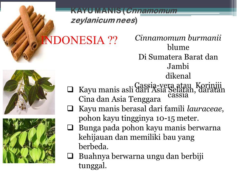 KAYU MANIS (Cnnamomum zeylanicum nees)