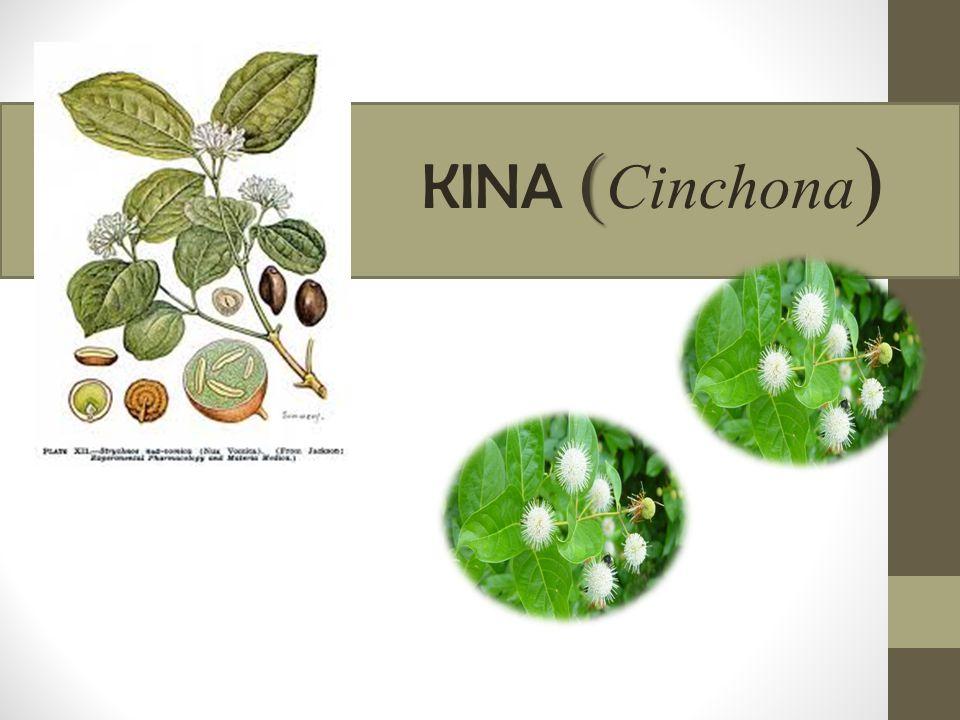 KINA (Cinchona)