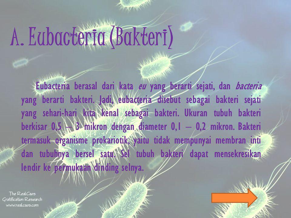 A. Eubacteria (Bakteri)