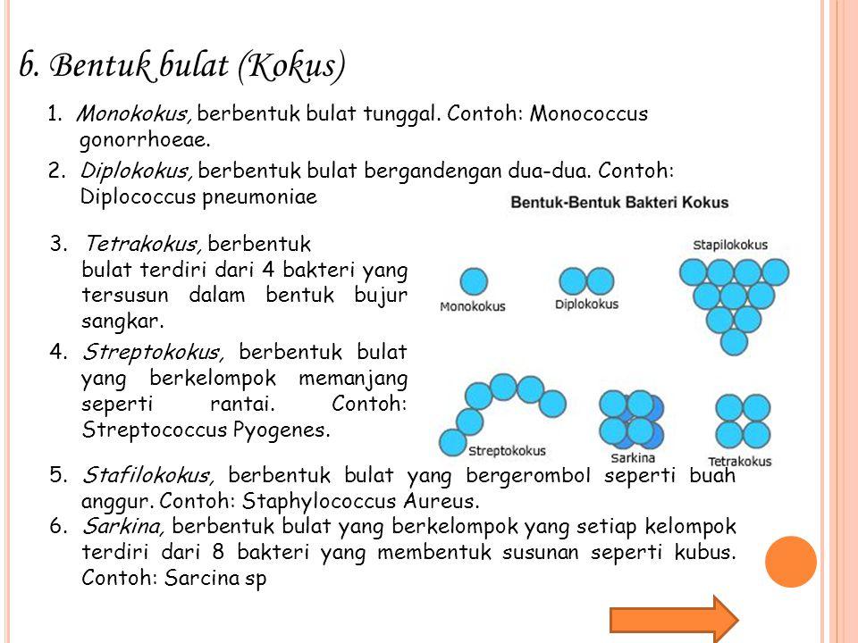 Bentuk bulat (Kokus) 1. Monokokus, berbentuk bulat tunggal. Contoh: Monococcus. gonorrhoeae.