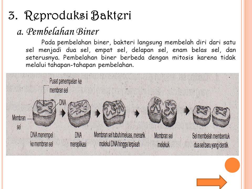 3. Reproduksi Bakteri Pembelahan Biner