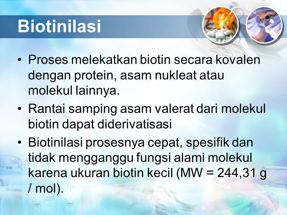 Biotinilasi Proses melekatkan biotin secara kovalen dengan protein, asam nukleat atau molekul lainnya.