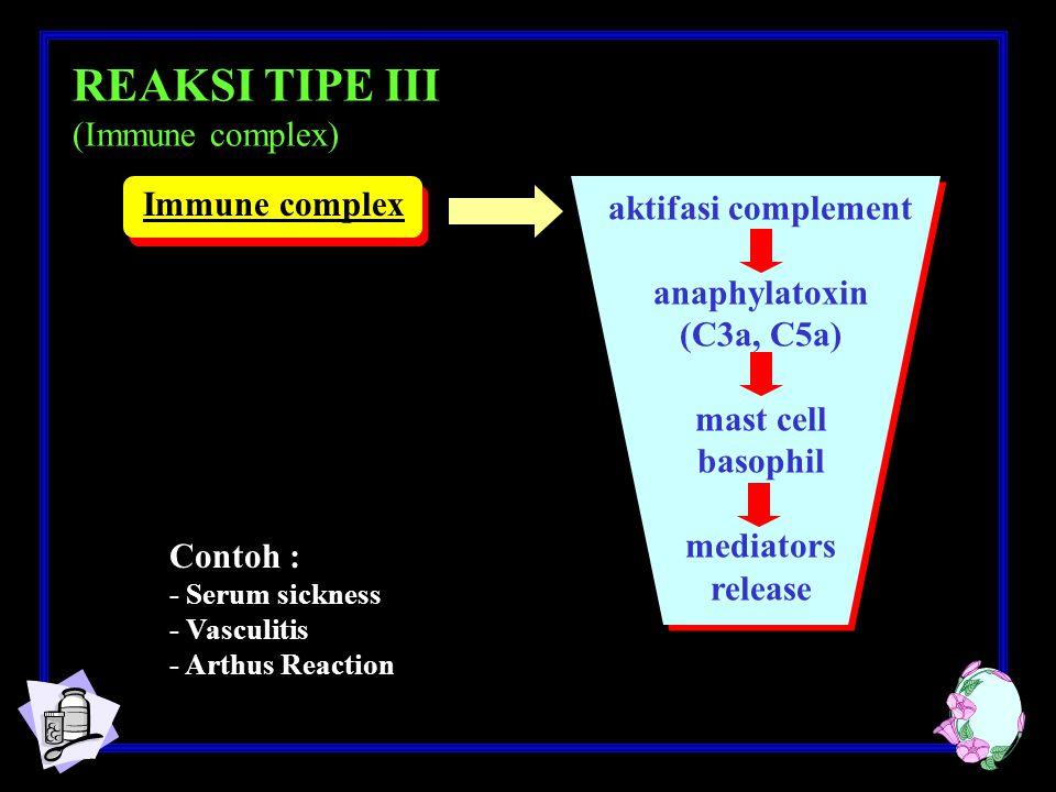 REAKSI TIPE III (Immune complex) Immune complex aktifasi complement
