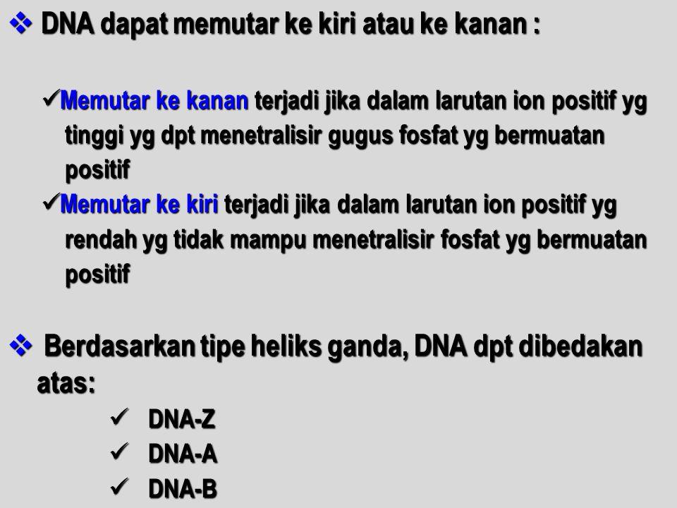 DNA dapat memutar ke kiri atau ke kanan :