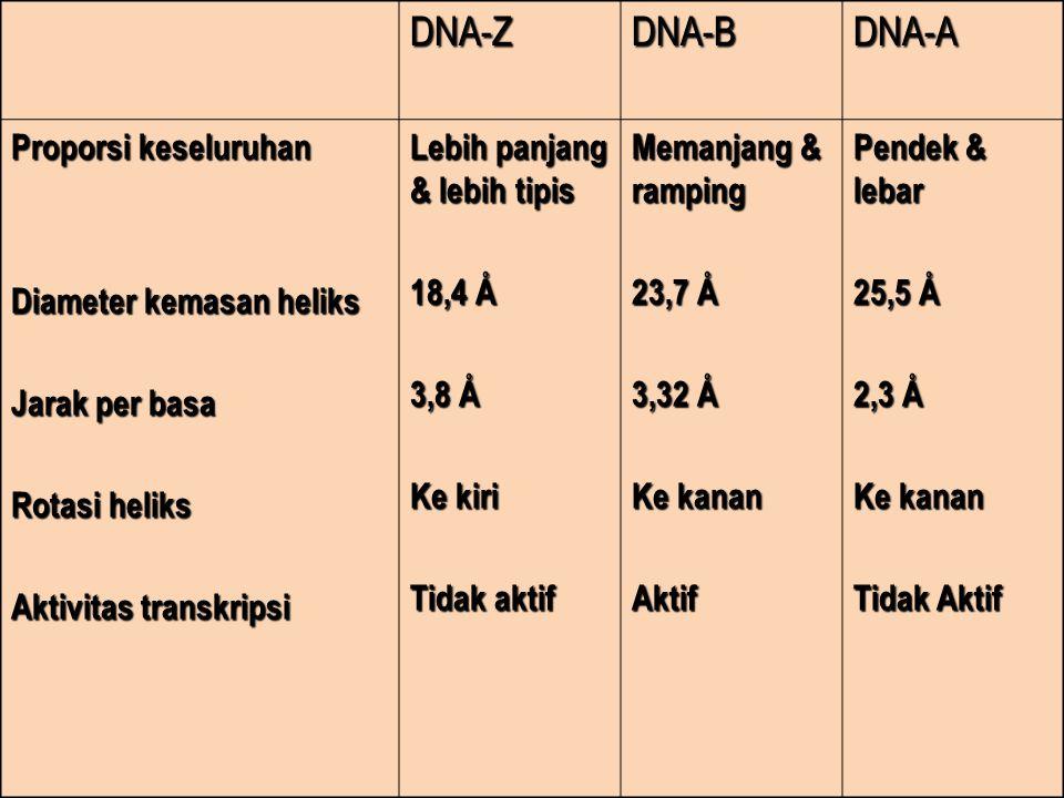 DNA-Z DNA-B DNA-A Proporsi keseluruhan Diameter kemasan heliks
