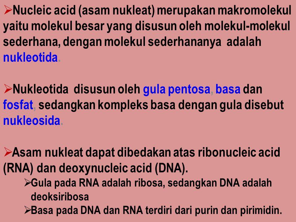 Nucleic acid (asam nukleat) merupakan makromolekul yaitu molekul besar yang disusun oleh molekul-molekul sederhana, dengan molekul sederhananya adalah nukleotida.