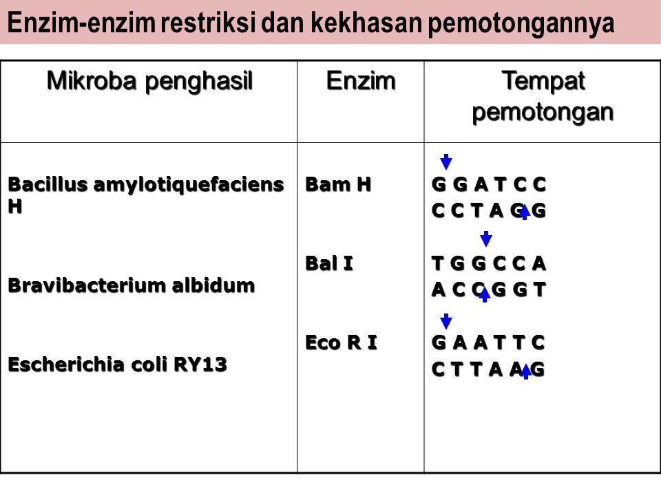 Enzim-enzim restriksi dan kekhasan pemotongannya