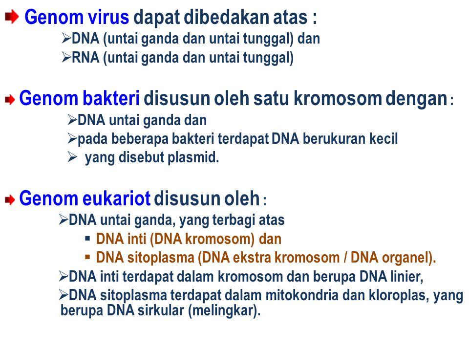 Genom virus dapat dibedakan atas :