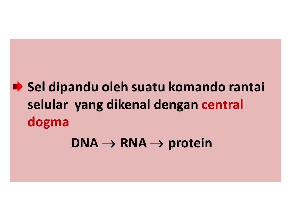 Sel dipandu oleh suatu komando rantai selular yang dikenal dengan central dogma