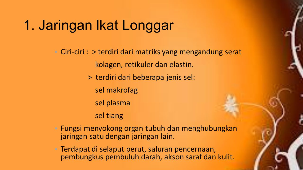 1. Jaringan Ikat Longgar Ciri-ciri : > terdiri dari matriks yang mengandung serat. kolagen, retikuler dan elastin.