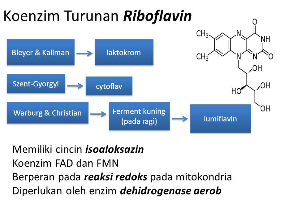 Koenzim Turunan Riboflavin