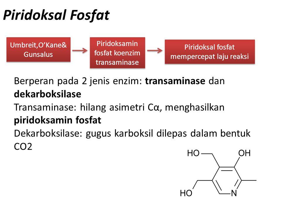Piridoksal Fosfat Umbreit,O'Kane&Gunsalus. Piridoksamin fosfat koenzim transaminase. Piridoksal fosfat mempercepat laju reaksi.