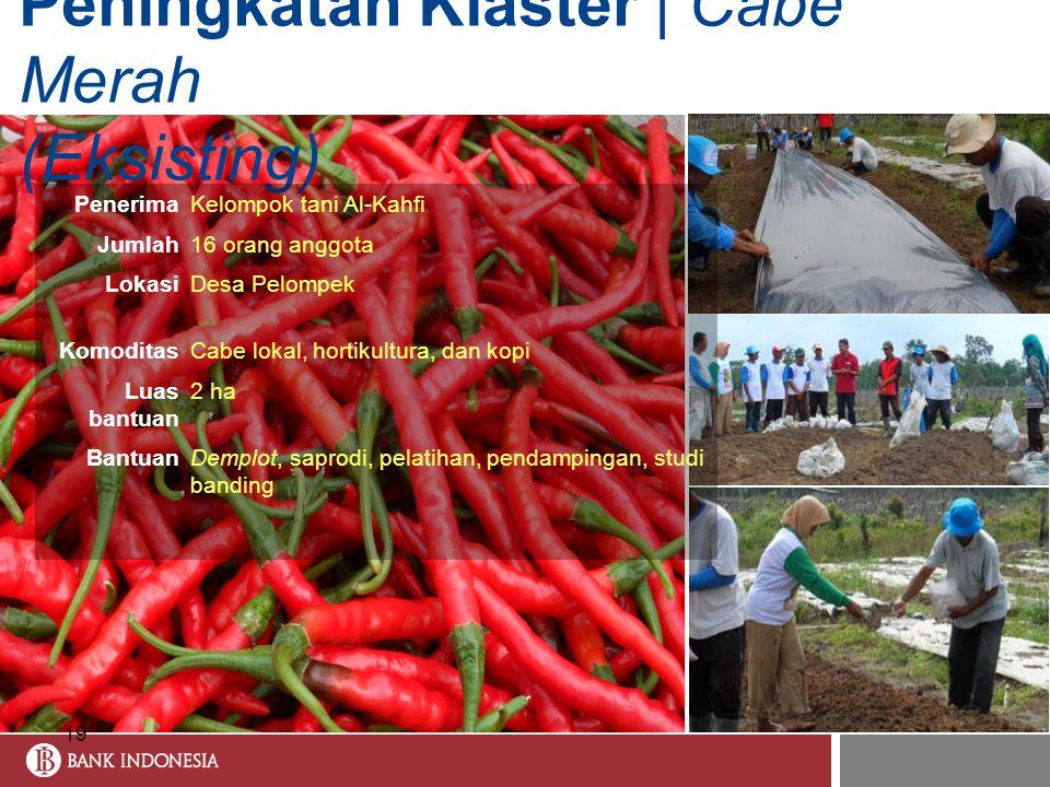 Peningkatan Klaster | Cabe Merah (Eksisting)