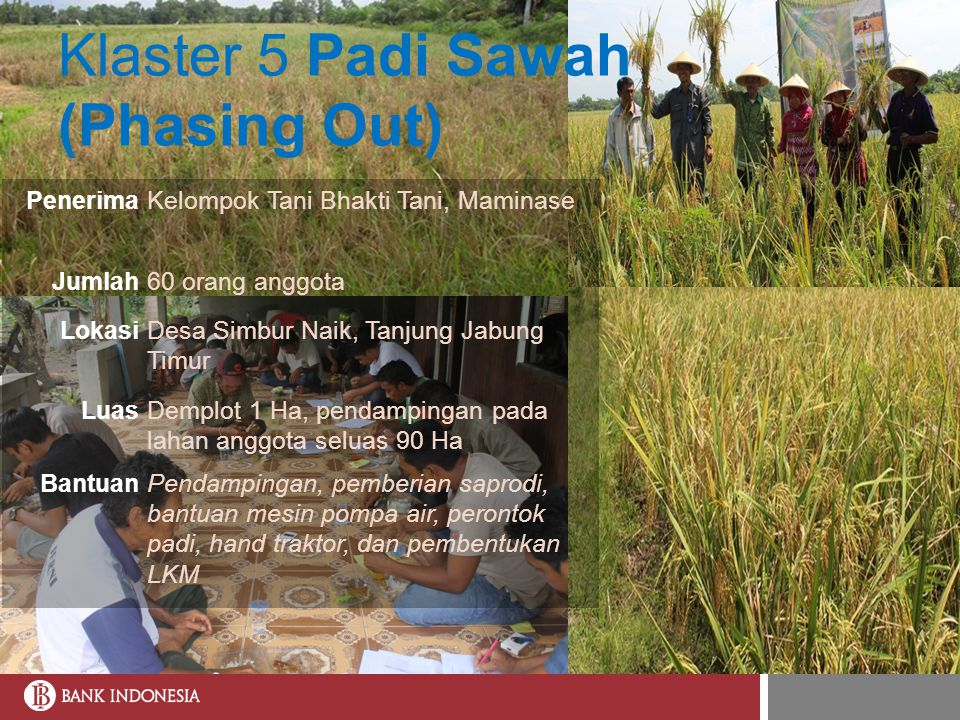 Klaster 5 Padi Sawah (Phasing Out)
