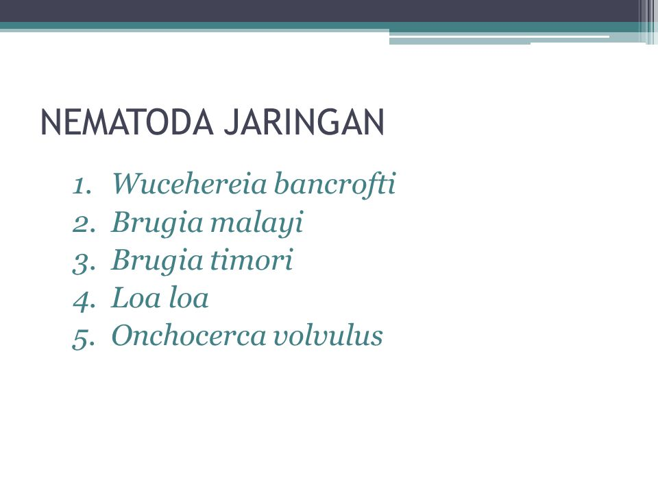 NEMATODA JARINGAN Wucehereia bancrofti Brugia malayi Brugia timori