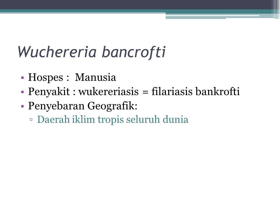 Wuchereria bancrofti Hospes : Manusia