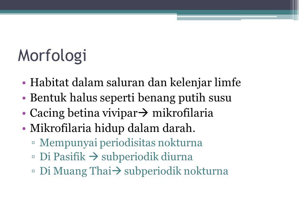 Morfologi Habitat dalam saluran dan kelenjar limfe