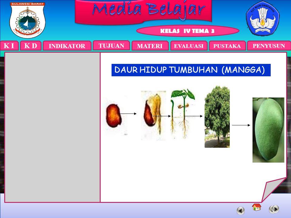 DAUR HIDUP TUMBUHAN (MANGGA)