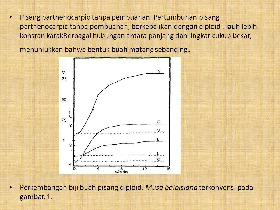 Pisang parthenocarpic tanpa pembuahan