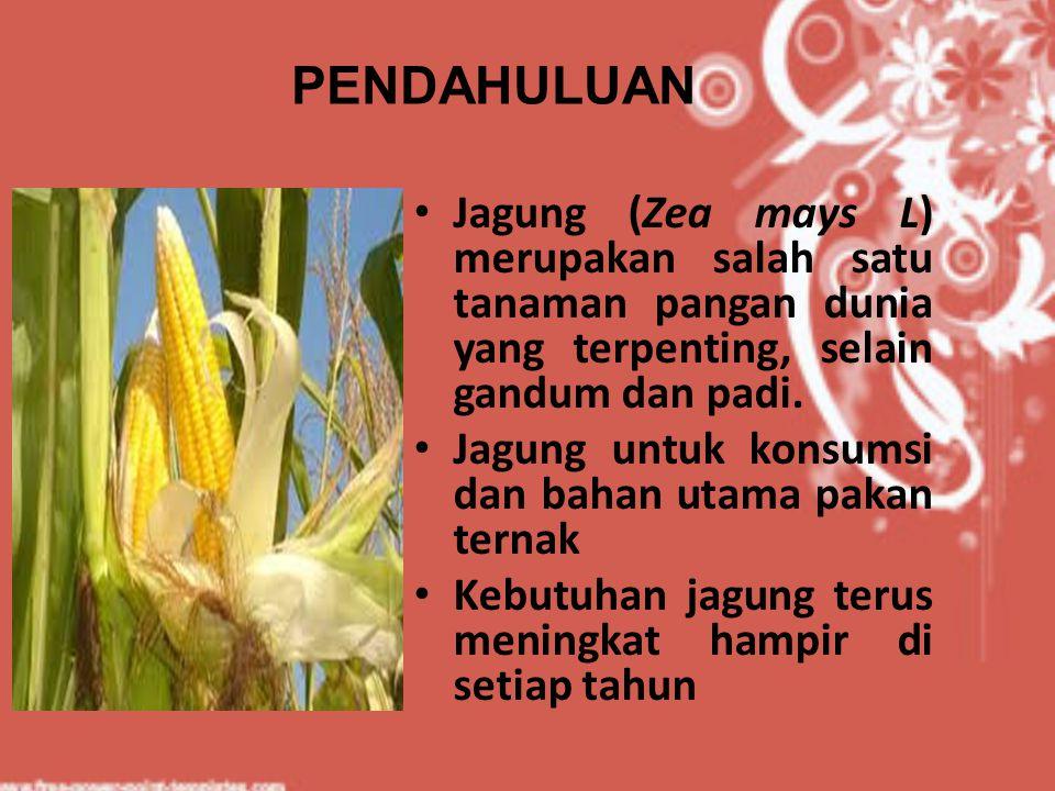 PENDAHULUAN Jagung (Zea mays L) merupakan salah satu tanaman pangan dunia yang terpenting, selain gandum dan padi.