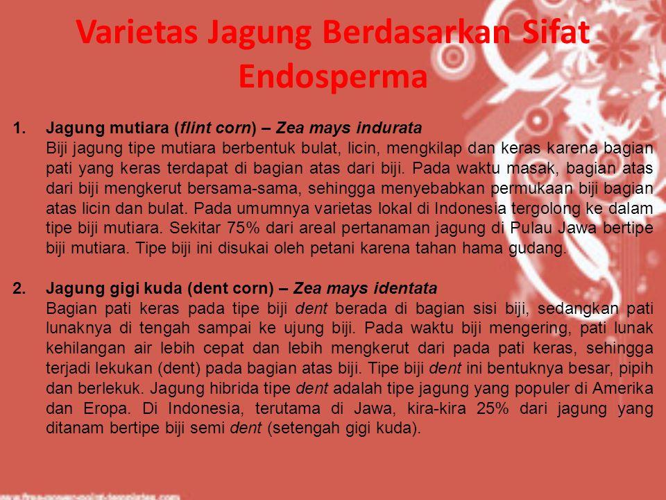 Varietas Jagung Berdasarkan Sifat Endosperma