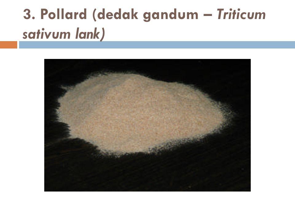 3. Pollard (dedak gandum – Triticum sativum lank)