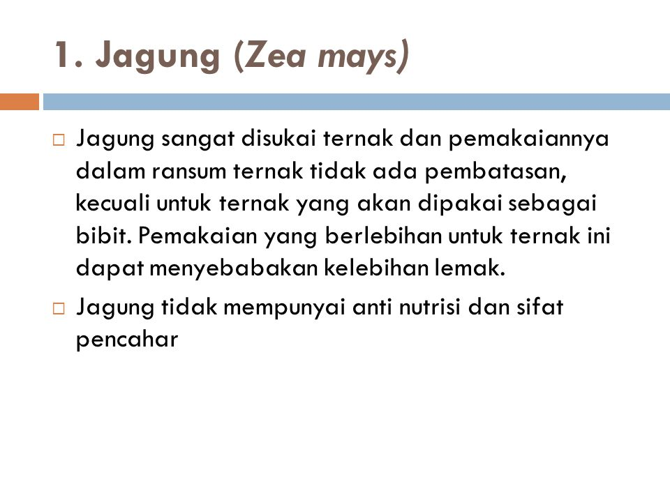 1. Jagung (Zea mays)