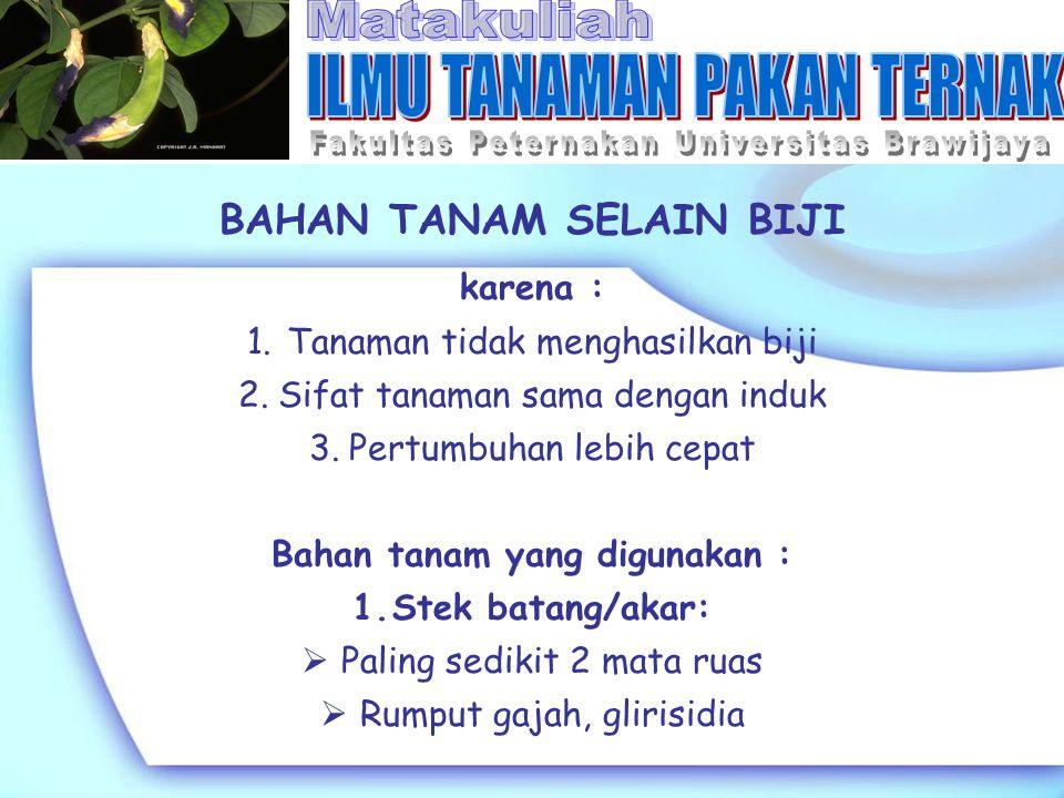 BAHAN TANAM SELAIN BIJI Bahan tanam yang digunakan :